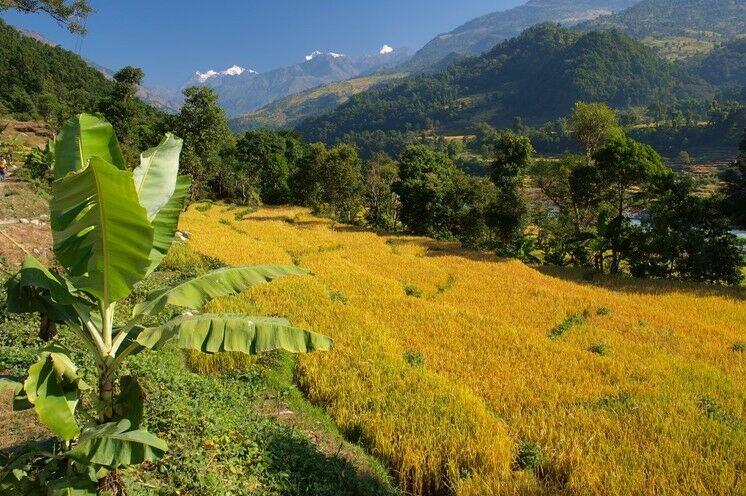 Die ersten Tage führen durch Gärten mit Mangobäumen und Bananstauden sowie fruchtbare Felder in moderaten Höhen. (Foto F. Nimsch)