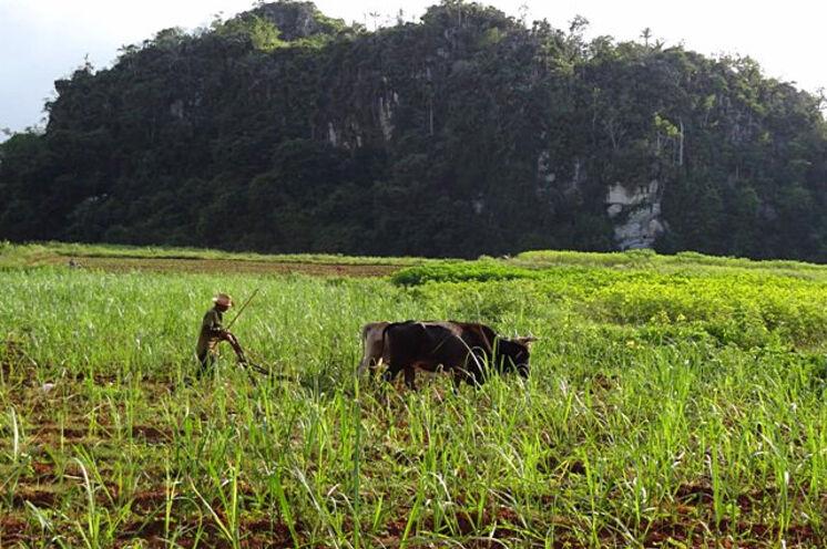 Entlang der Tabakfelder radeln Sie durch das Viñales-Tal