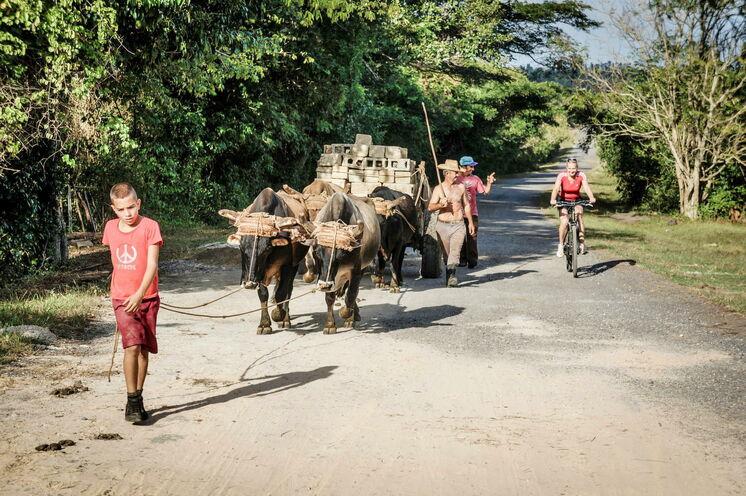 Authentische Begenungen: Auf der Kuba-Fahrradreise teilen Sie sich die Fahrtstrecken mit allerlei anderen Fahrzeugen