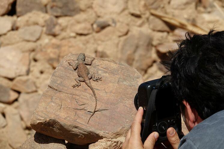 Auch die kleinen Schönheiten der Wüste werden - nur fotografisch - eingefangen