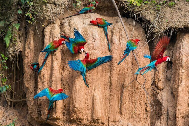 Besuch einer Papageienlecke