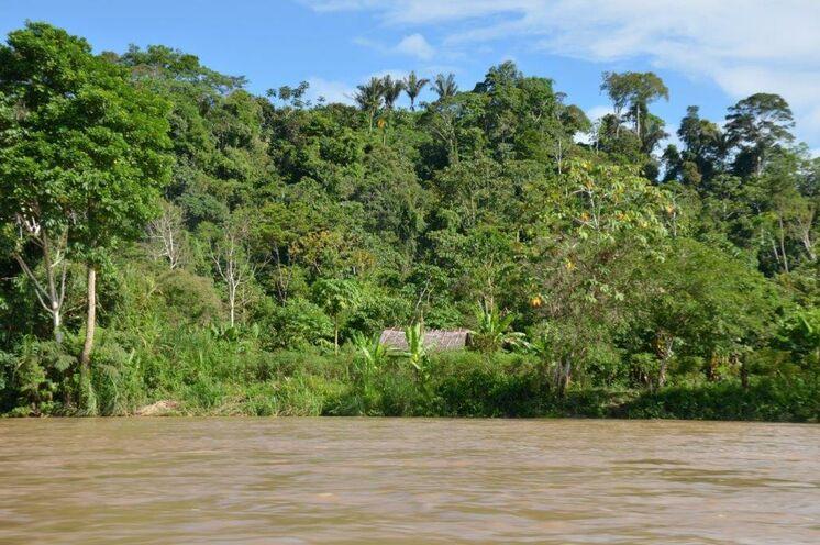 Ein Abstecher in den Dschungel bietet Tiefblicke. Genau hier finden sich vier gänzlich unterschiedliche Naturräume: Amazonas, Anden, Küste und Galapagos.