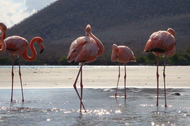 Flamingos im Flachwasser