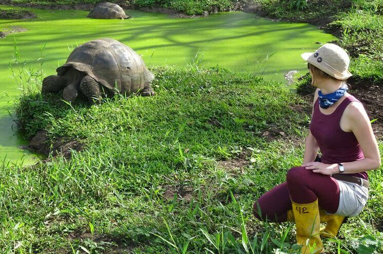Die Galapagos Riesenschildkröte