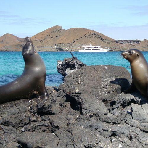 Verlängerung: Wunderwelt Galapagos