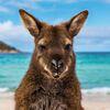 Sonderreise: Wanderhöhepunkte von Tasmanien bis ins Outback
