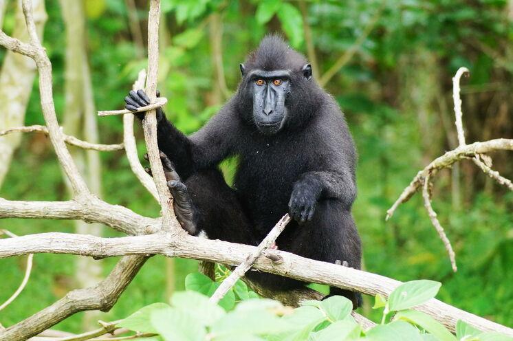 Tierische Begegnungen während des Trekkings im Nationalpark in Nordsulawesi