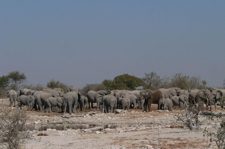 Tierwelt im Etoscha Nationalpark