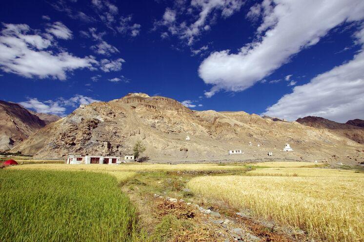 Der Markha Valley Trek gehört zu den schönsten Wanderwegen in der Hochgebirgsregion Ladakh