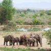 Auf Safari von den Victoriafällen bis Mana Pools