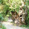 Camino Francés – die letzten 115 km des berühmtesten Jakobswegs
