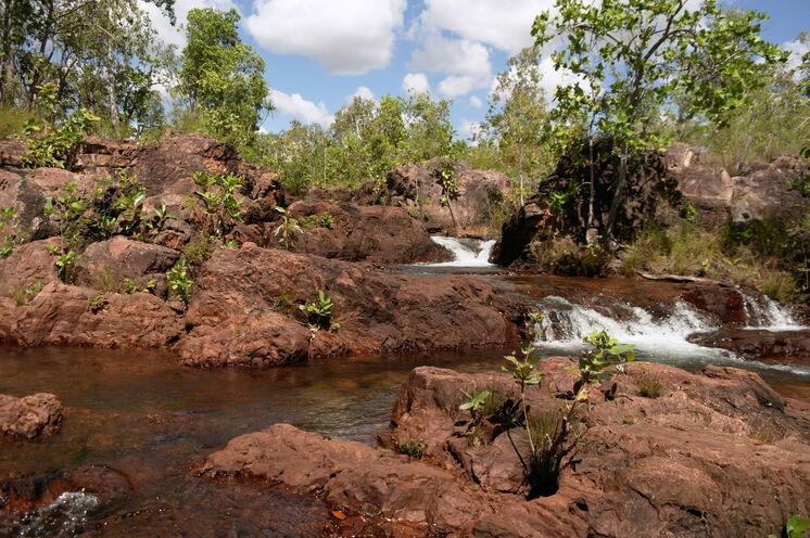 Der Litchfield Nationalpark ist bekannt für seine gigantischen Termitenhügel, tollen Badegumpen und  rauschenden Wasserfälle