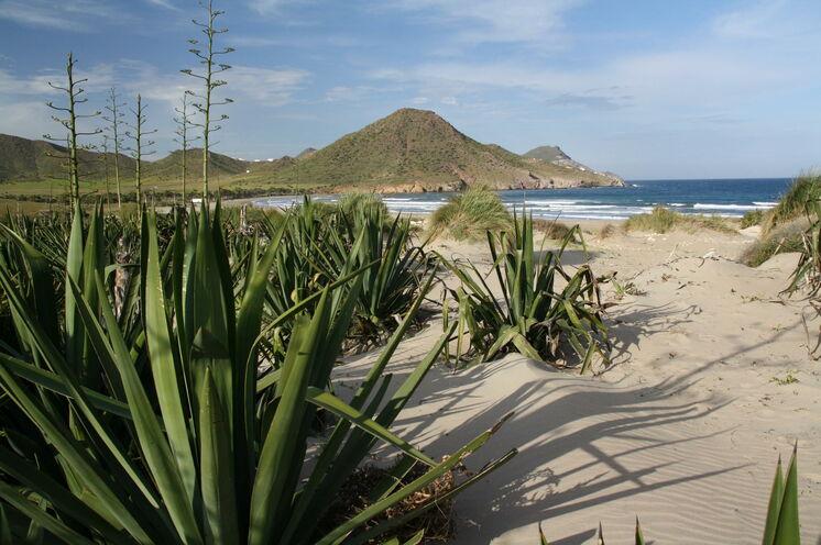 Im maritimen Naturpark Cabo de Gata erwarten Sie traumhafte Naturstrände