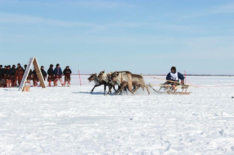 Traditionelle Wettspiele - wie zum Beispiel das Rentierschlittenrennen sorgen für Jubel und Heiterkeit