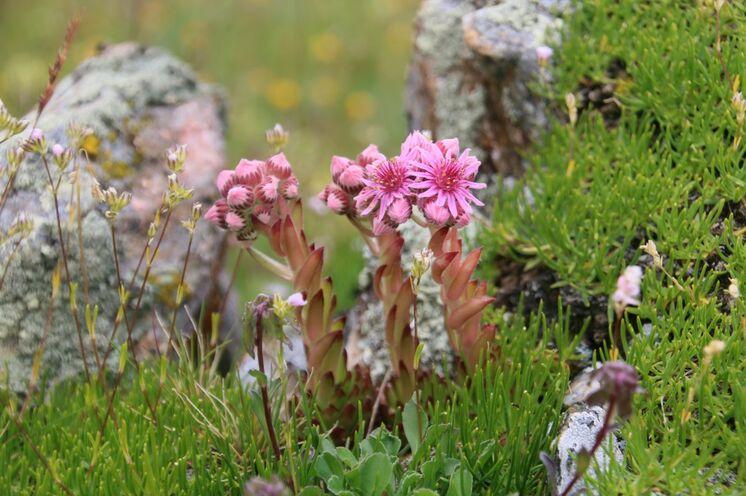 Vor allem der Artenreichtum der Pflanzenwelt lässt das aufmerksame Wanderherz höher schlagen.