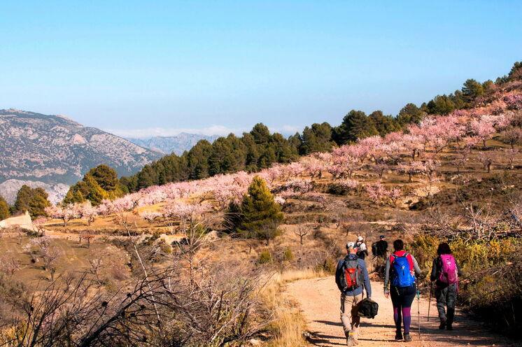 ...die von weißrosa bis pink blühenden Bäume bieten eine stimmungsvolle Wanderkulisse