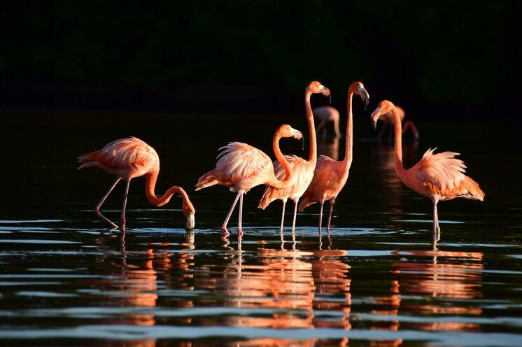 Rio Lagartos ist bekannt für seine Flamingos