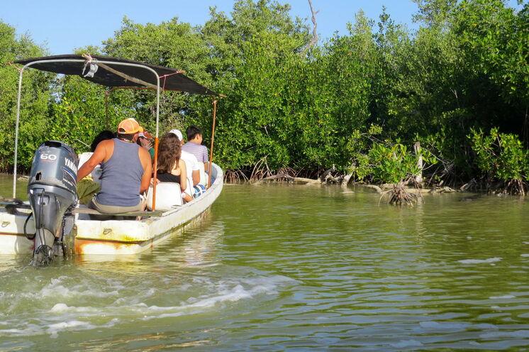 Per Boot sind Sie im Naturschutzgebiet Rio Lagartos unterwegs auf Tierbeobachtungstour (Tag 2)