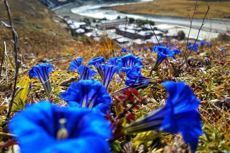 Auf den Wanderungen treffen Sie immer wieder auf farbenprächtige alpine Flora