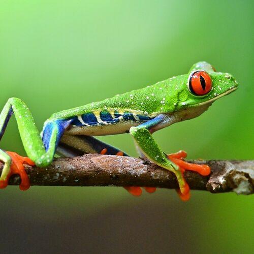 Costa Ricas Höhepunkte