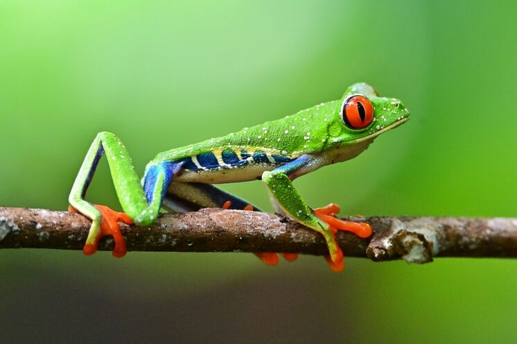 Herzlich Willkommen im tropischen Natur- und Outdoor-Paradies! (Foto: Roland Lubiger)