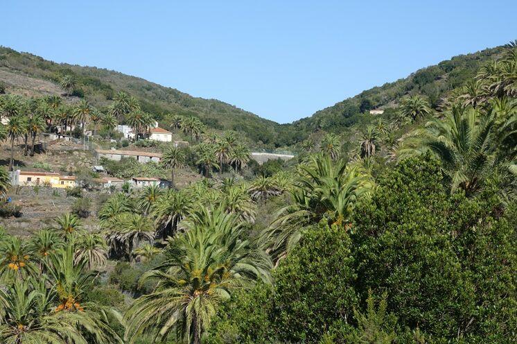 Auf der zweitkleinsten Kanaren-Insel La Gomera mit ihren zahlreichen Tälern wachsen die meisten Palmen
