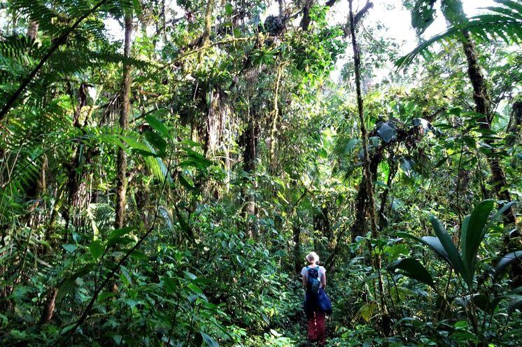 Ein Abstecher in den Dschungel bietet Tiefblicke.