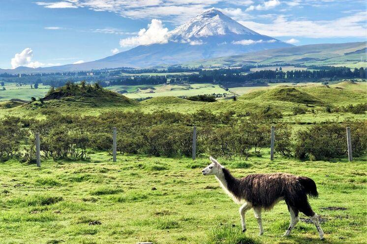 Fahrt entlang der Straße der Vulkane mit Blick auf den formschönen Cotopaxi (5897 m).