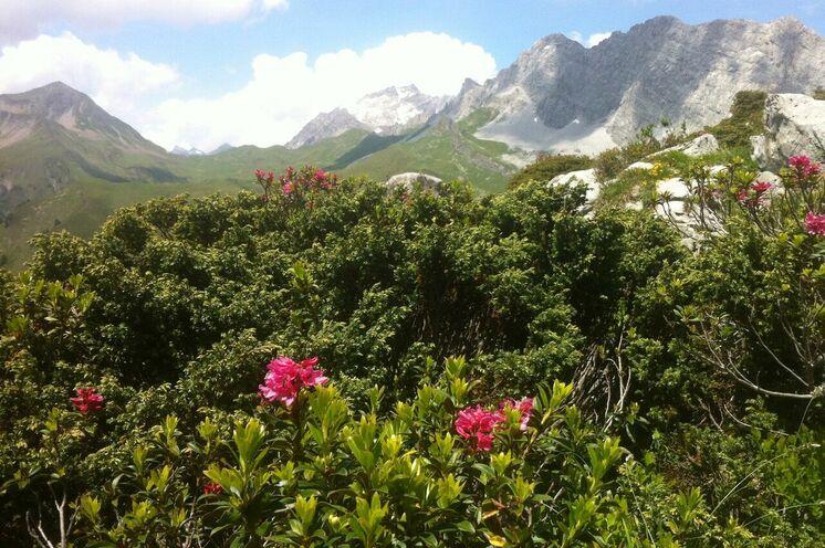 Herrliches Blütenmeer und schroffe Gipfel