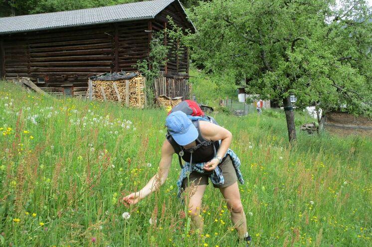 Saftig grüne Wiesen laden zum Verweilen und Entdecken ein