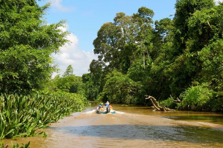 Per Boot erkunden Sie den Kinabatangan, Lebensquelle für Flora und Fauna (Bild: Bettina Breuer)