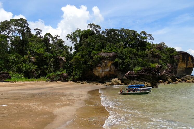 Mit dem Boot fahren Sie zum Bako-Nationalpark. Nasenaffen, Makaken und fleischfressende Pflanzen warten hier auf Sie. (Bild: Bettina Breuer)