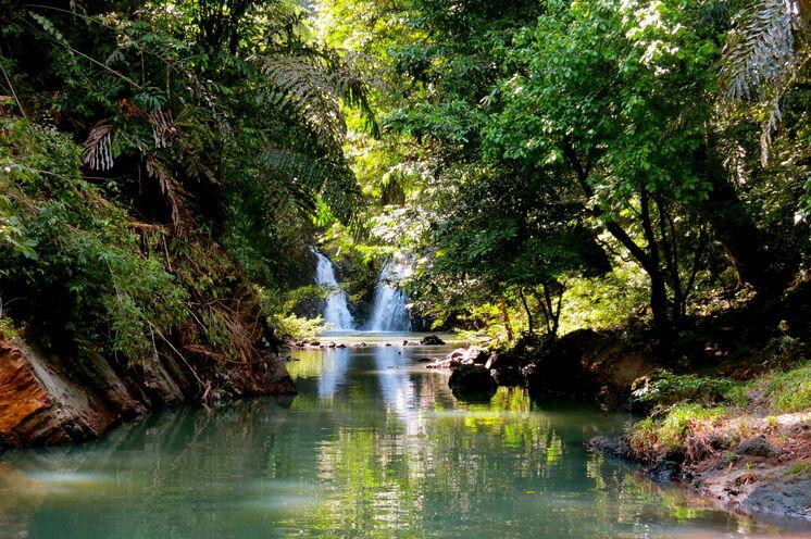 Borneos Regenwälder zählen zu den ältesten und artenreichsten unserer Erde (Bild: Bettina Breuer)