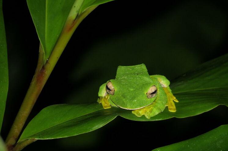 Während einer Nachtwanderung entdecken Sie auch die kleinen Bewohner des Dschungels (Bild: Bettina Breuer)