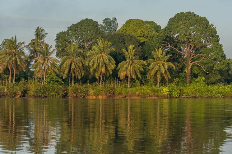 Auf dem Kinabatangan haben Sie beste Voraussetzungen, um die Primaten in freier Natur zu erleben (Bild: Mondberge/Andreas Klotz)