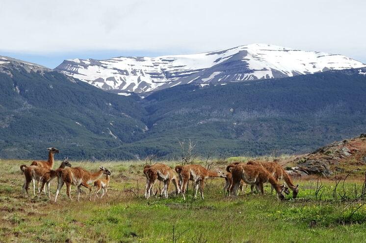 Im neu etablierten Park Patagonia unternehmen Sie ein Tageswanderung auf dem Avilés Trail