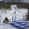 Auf leisen Pfoten durch die letzte Wildnis Schwedisch-Lapplands