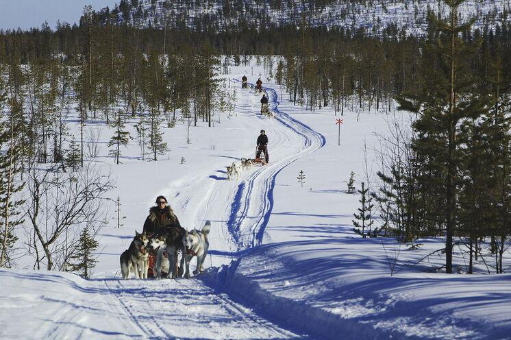 Mit eigenem Huskygespann durch einen Winter, den es so nur im Hohen Norden gibt