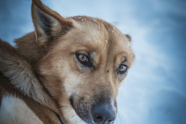 In Ruhe lernen Sie Ihre Hunde kennen, bevor es am dritten Tag hinaus in die schwedische Wildnis geht