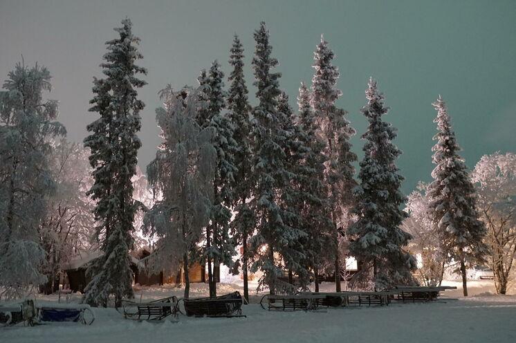 Abendstimmung im Winterwald