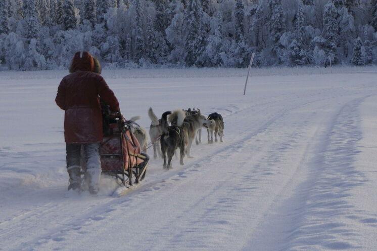Unterwegs im winterlichen Schwedisch Lappland