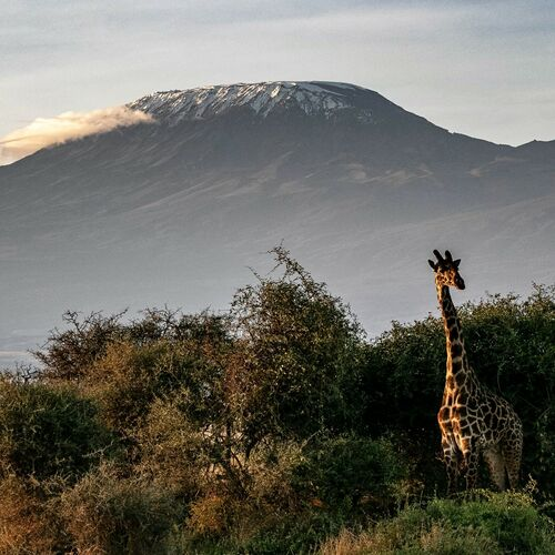Aktive Safaris zwischen Mt. Kenya und Kili