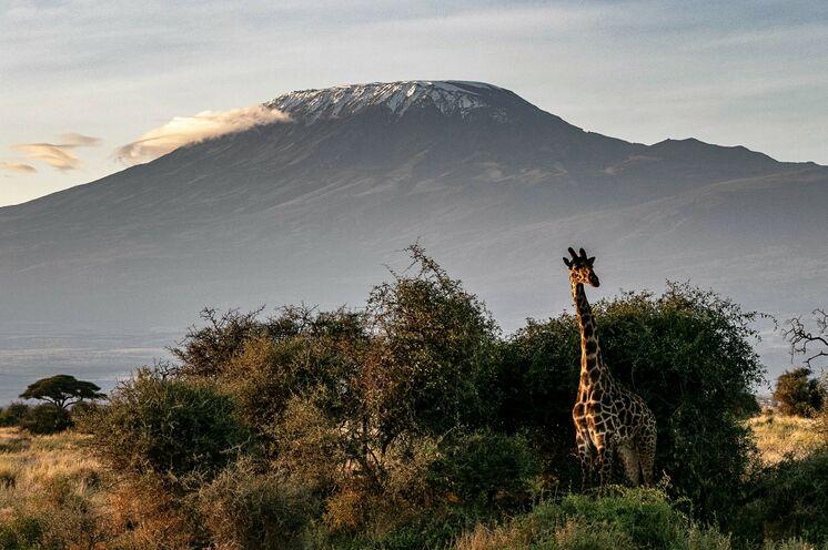 Auftakt unserer Aktiv-Safari ist der Amboseli-Nationalpark mit dem Kilimanjaro im Hintergrund