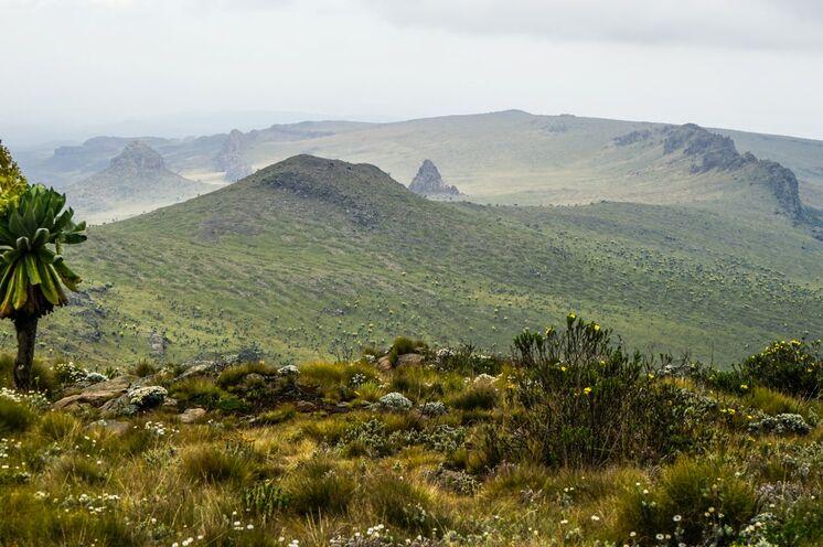 Die Aberdares sind ein weitläufiges Hochland und ideal für einige Wandertage.