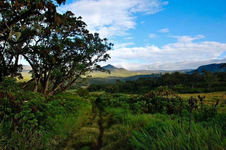 Die Besteigung beginnt in sattgrüner Landschaft (Chris Murphy, via Flickr - CC BY-ND 2.0)