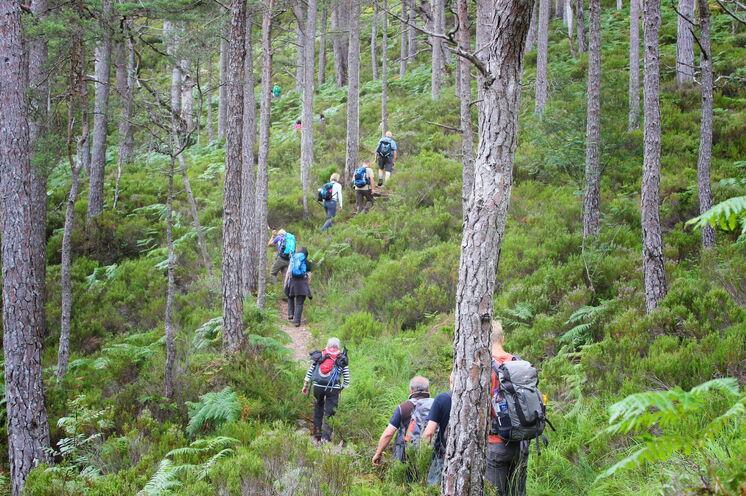 Die höchsten Bergspitzen sind großartige Gipfel, die weit hinter der Straße in einem der entlegensten Wildnisgebiete Großbritanniens liegen.