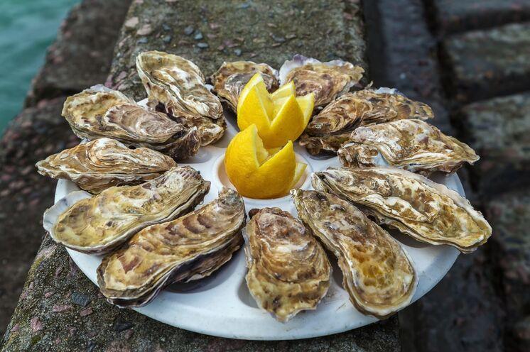 Bretonische Austern...die wohlschmeckende Spezialität und der kulinarische Schatz der Küstenregionen