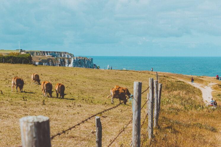 Die Alabasterküste bei Étretat (Bild: Ilnur Kalimullin)