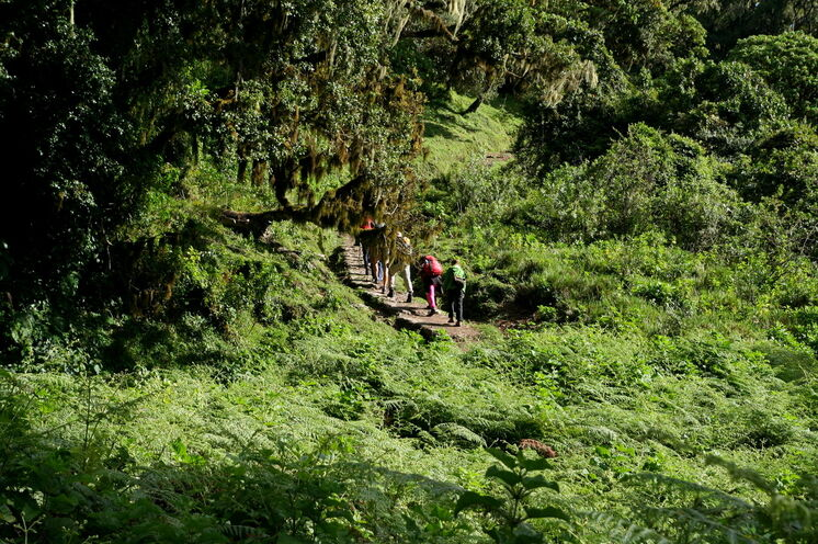 Zu Beginn wandern Sie durch märchenhaften Bergregenwald. Die Vegetationszonen wechseln schnell.