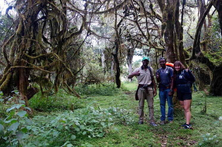 Mystischer Regenwald prägt das Erlebnis Mt. Meru